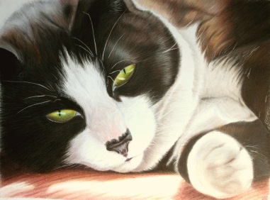 Monty, commissioned 2013, coloured pencil, 10x12""