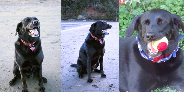 It can be really useful to have a number of pictures of your pet, if you have them- even if you decide you want one specific posture