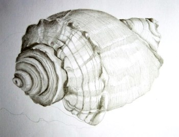 Turret Shell sketch, graphite