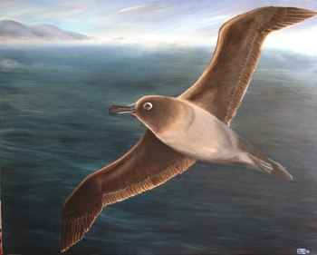 Light mantled sooty albatross, 2013, acrylic on board