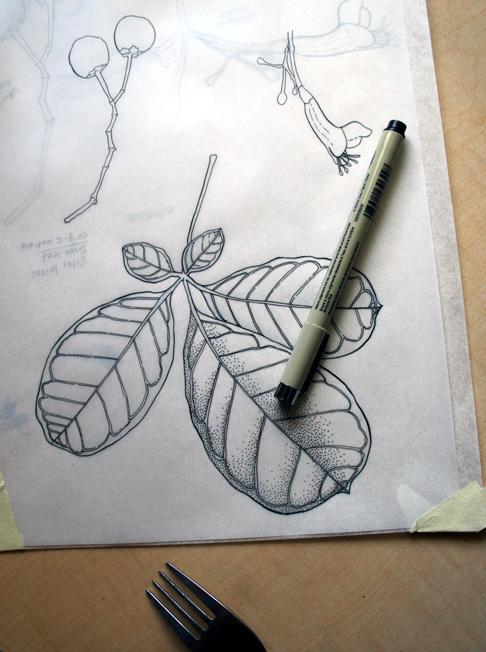 botanical-in-progress
