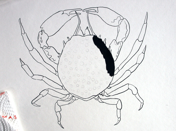 crabscratch1