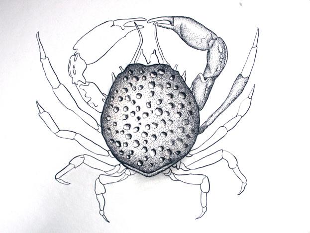 crabscratch2