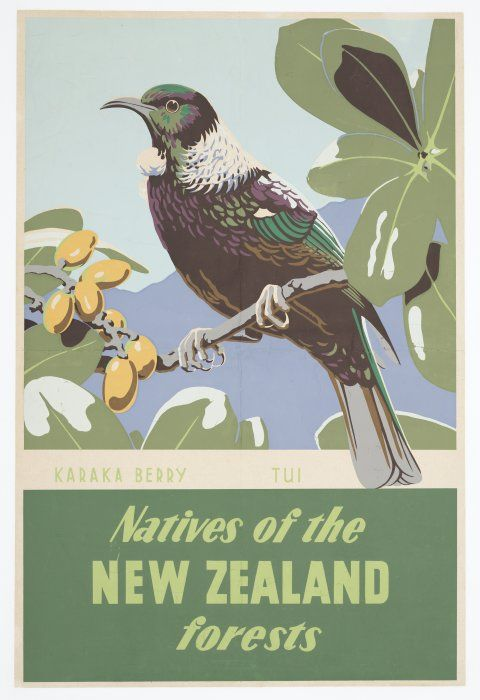Natives of the New Zealand forests - Karaka berry, tui [1930s?] Reference Number: Eph-E-BIRD-1930s-01 Poster showing a tui perched on a branch of a karaka tree. There are yellow karaka berries at the left.
