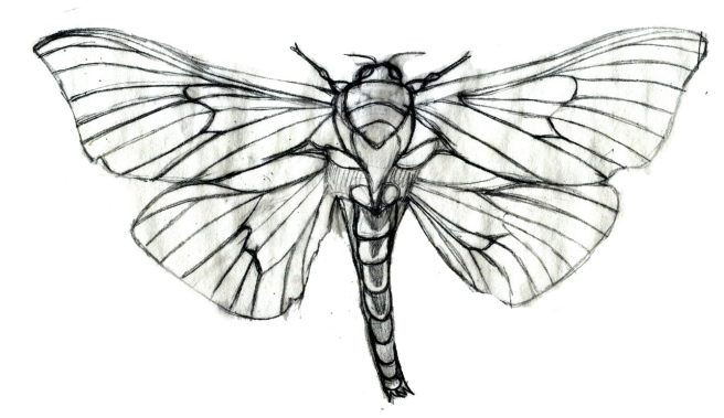 adult-male-moth-outline-sketchRESIZED