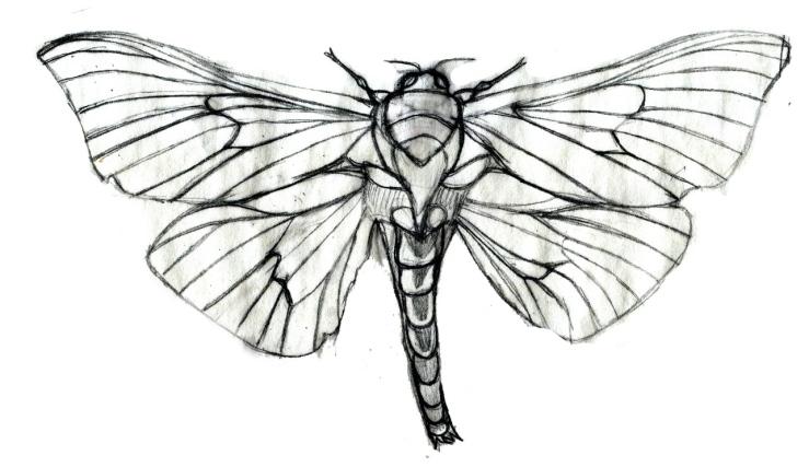 adult-male-moth-outline-sketchRESIZED