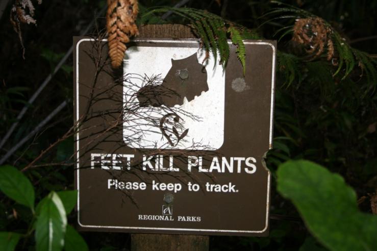 feet-kill-plants