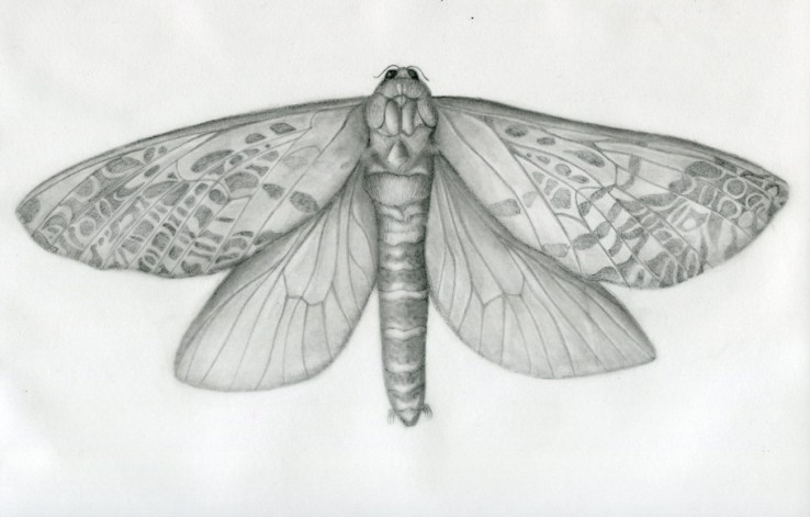 female-moth-test-size020