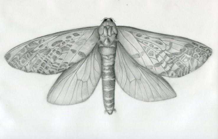 female-moth-test-size020