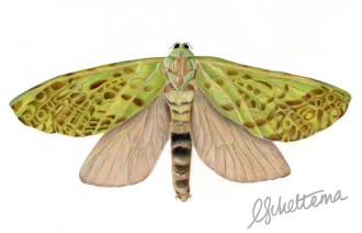 female-moth003