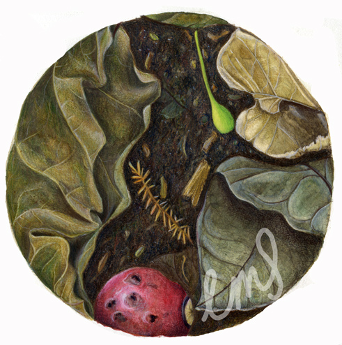 leaf litter close up, watercolour and coloured pencil, 2014