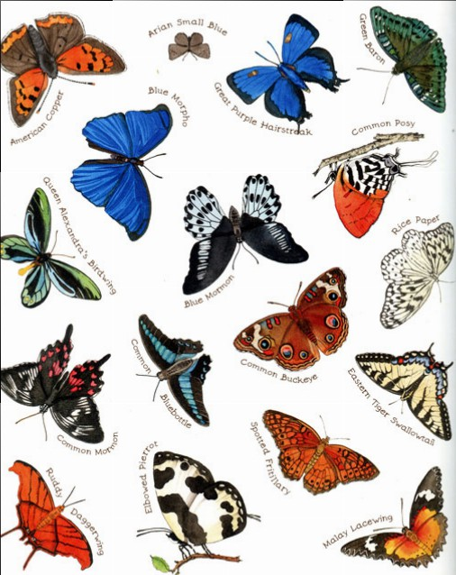 butterfly-endpaper