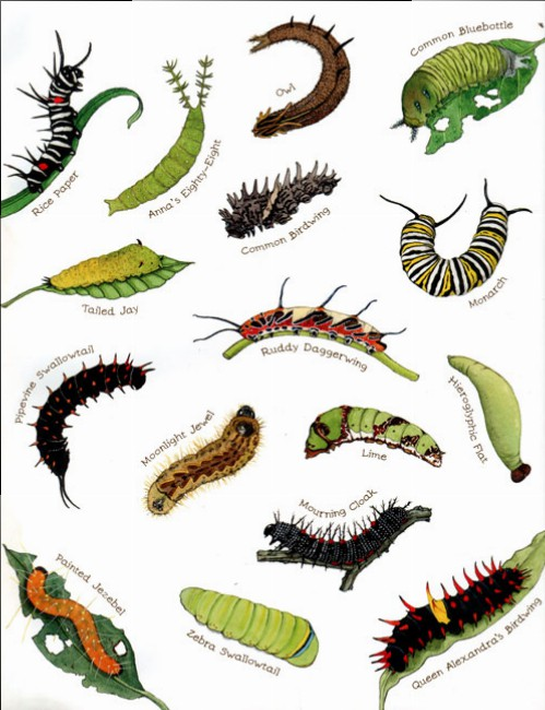 caterpillar-endpaper