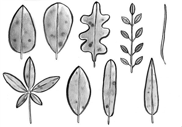 basic-leaf-shapes006