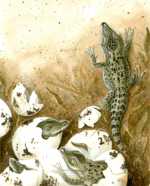crocodile-creche