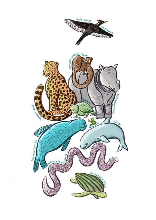 endangered-species-illustration-loweropacity