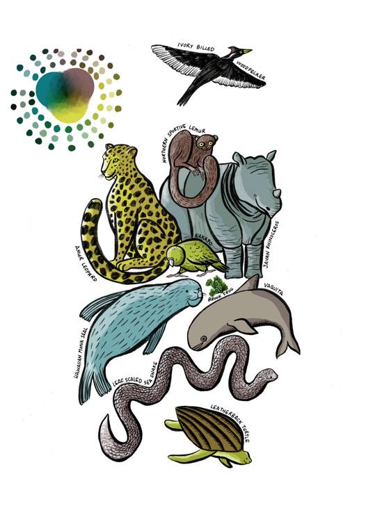 endangered-species-illustration-palette2