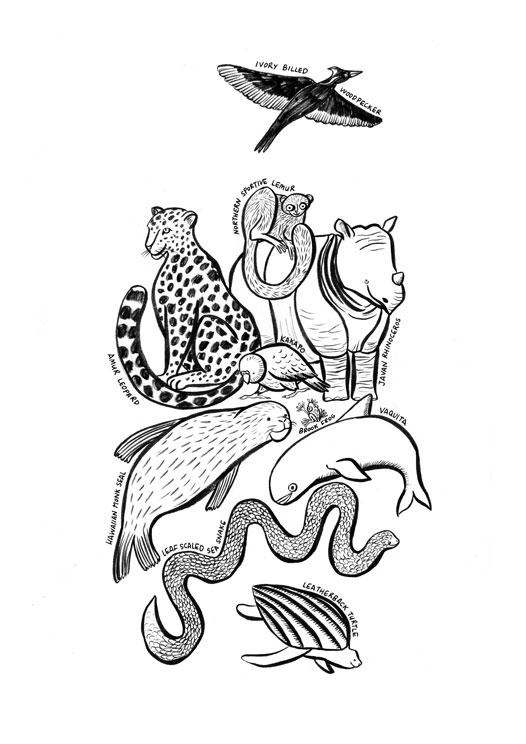 endangered-species-illustration_inked