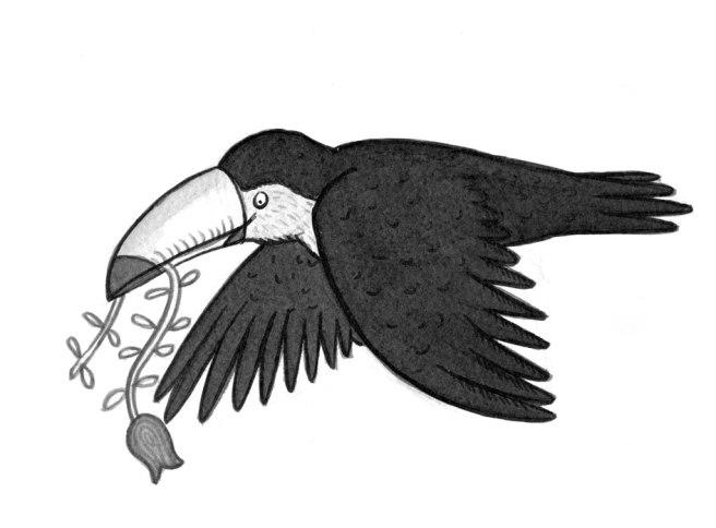 toucan_3008