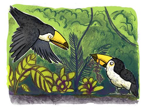 toucan_coloured-digitally
