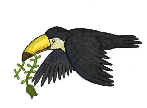 toucan_coloured