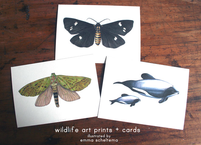 wildlifeprints+cards-web