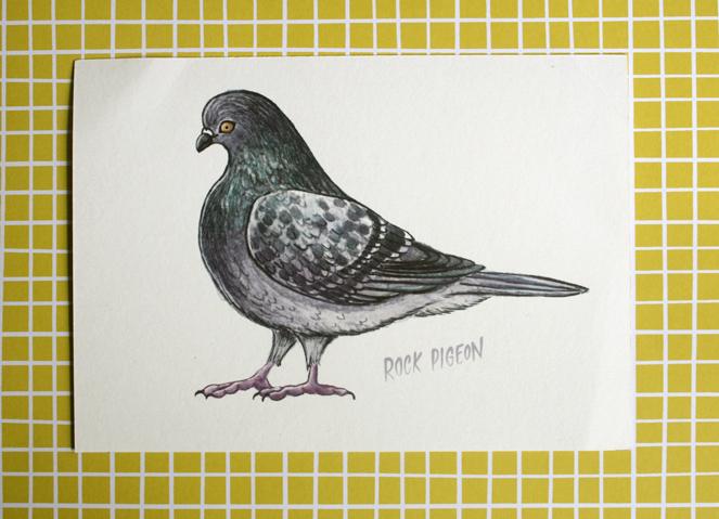 pigeon-print
