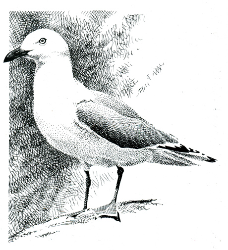 discovering-the-birds-of-gull