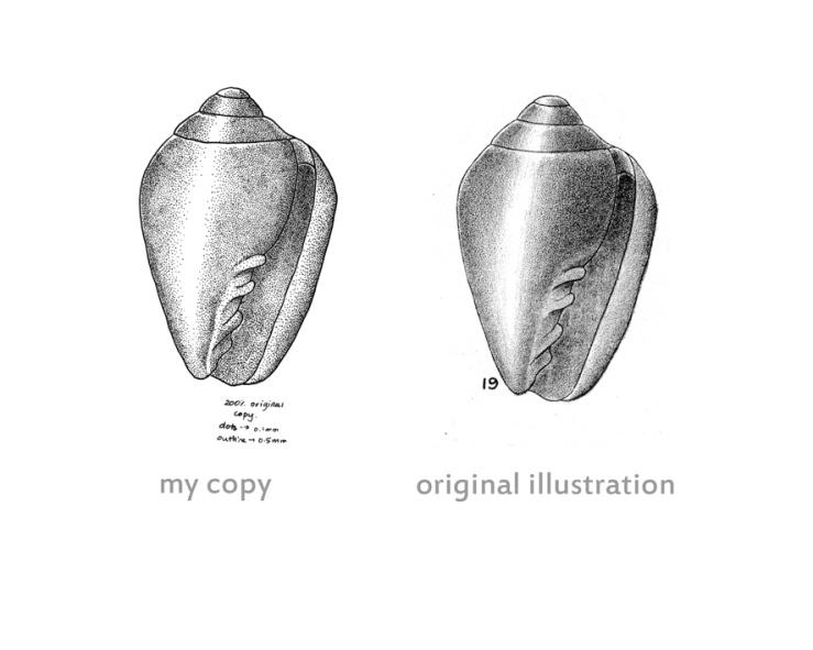 comparison-of-suter-shell-v-my-copy
